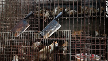 Dog Meat cats in cage knices
