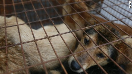Images of dogs of various breeds and sizes crammed in tiny cages and then killed have created an international backlash