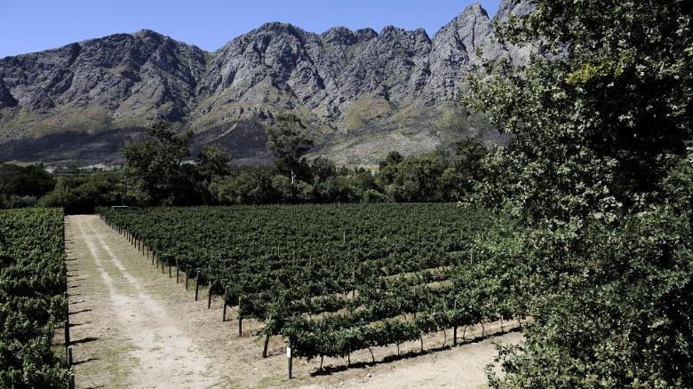 Zuid-Afrika is de thuisbasis van ongeveer 100.000 hectare wijngaarden in dienst 300.000 mensen.  De sector maakt een stijging van 2% van het BBP.