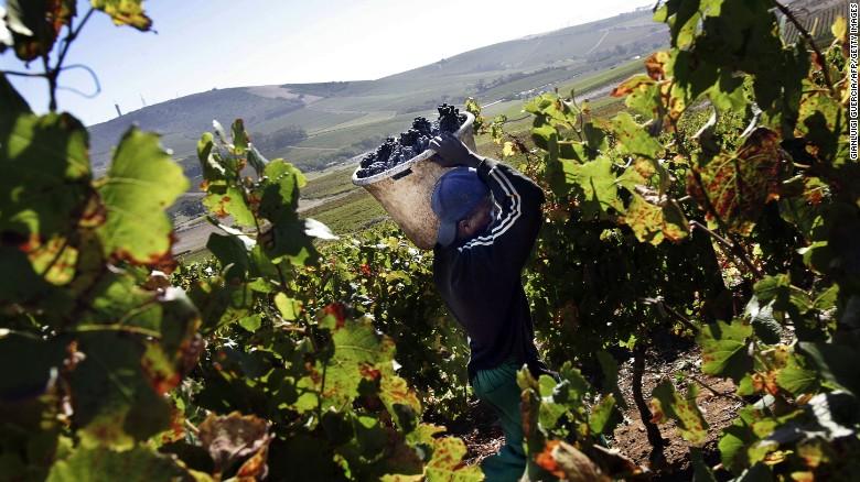 Voor een lange tijd, Zuid-Afrika & # 39; s zijn wijnen hard gevochten om te concurreren met hun oude wereld rivalen in termen van reputatie wereldwijd.