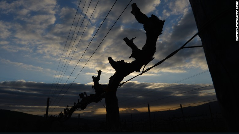 In termen van de Nieuwe Wereld rassen, Pinotage, een kruising tussen Pinot Noir en Cinsaut, is de meest opvallende.