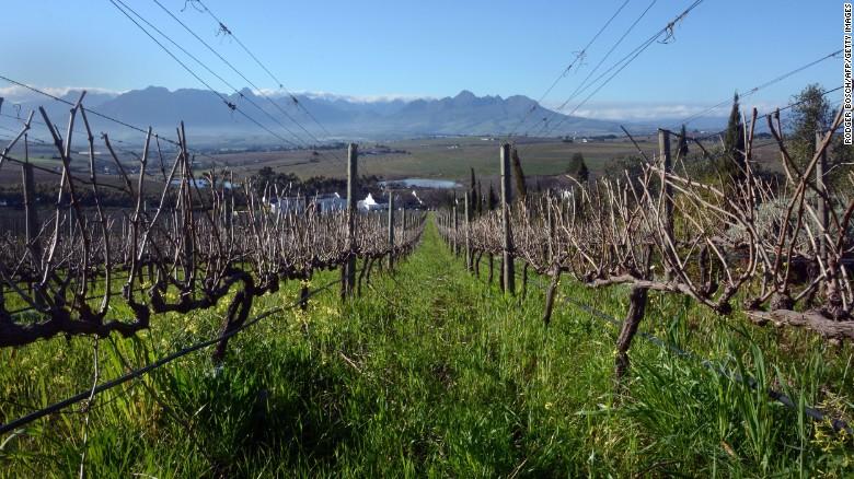 Wijn was hier voor het eerst geplant door Europese kolonisten in de 17e eeuw.  De oudste vruchtdragende wijnstok in het zuidelijk halfrond is gevestigd in Kaapstad, een Crouchen Blanc geplant rond 1771.
