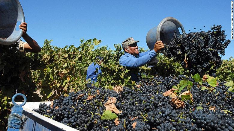 Op het land & # 39; s jaarlijkse Nederburg veiling in september, de prijzen per liter voor de wijnen op verkoop hit een all-time high, met rode wijn het zien van een toename van 50% van de gemiddelde prijs.