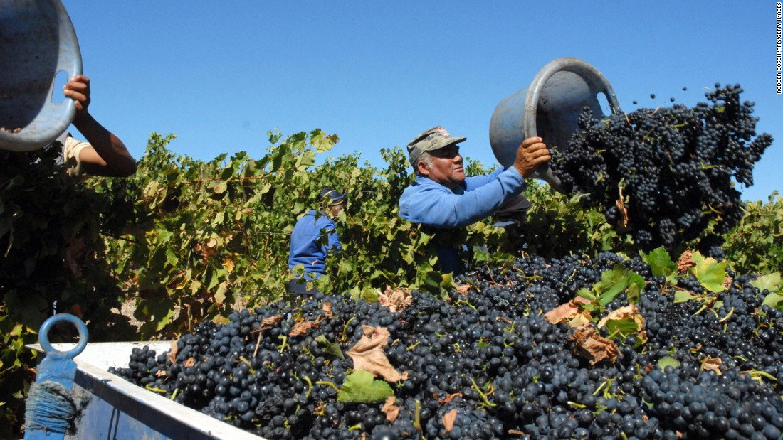 At the country's annual Nederburg auction in September, prices per litre for the wines on sale hit an all-time high, with red wines seeing a 50% increase in the average price.