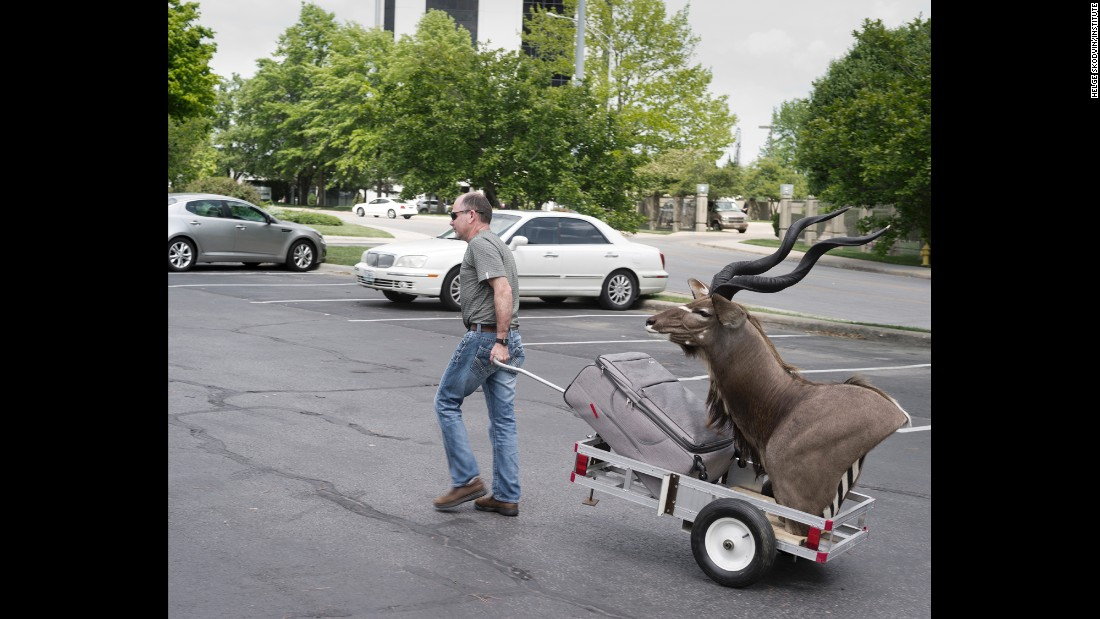 A man drags his suitcase -- and a kudu head -- before checking into a hotel.