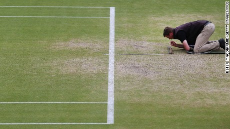 The challenges of maintaining a grass court