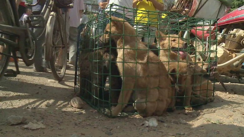 China's dog meat festival fires up activists