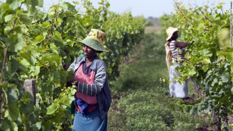 Ondanks de dominantie op het Afrikaanse continent, heeft Zuid-Afrika geen monopolie als het gaat om het maken van wijn.  Ethiopië, bijvoorbeeld, is het zien van een stijging van het maken van wijn na het Frans-gebaseerde firma Castel onlangs geïnvesteerd in de lokale wijngaarden.
