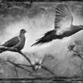 11 cnnphotos bird tintypes RESTRICTED