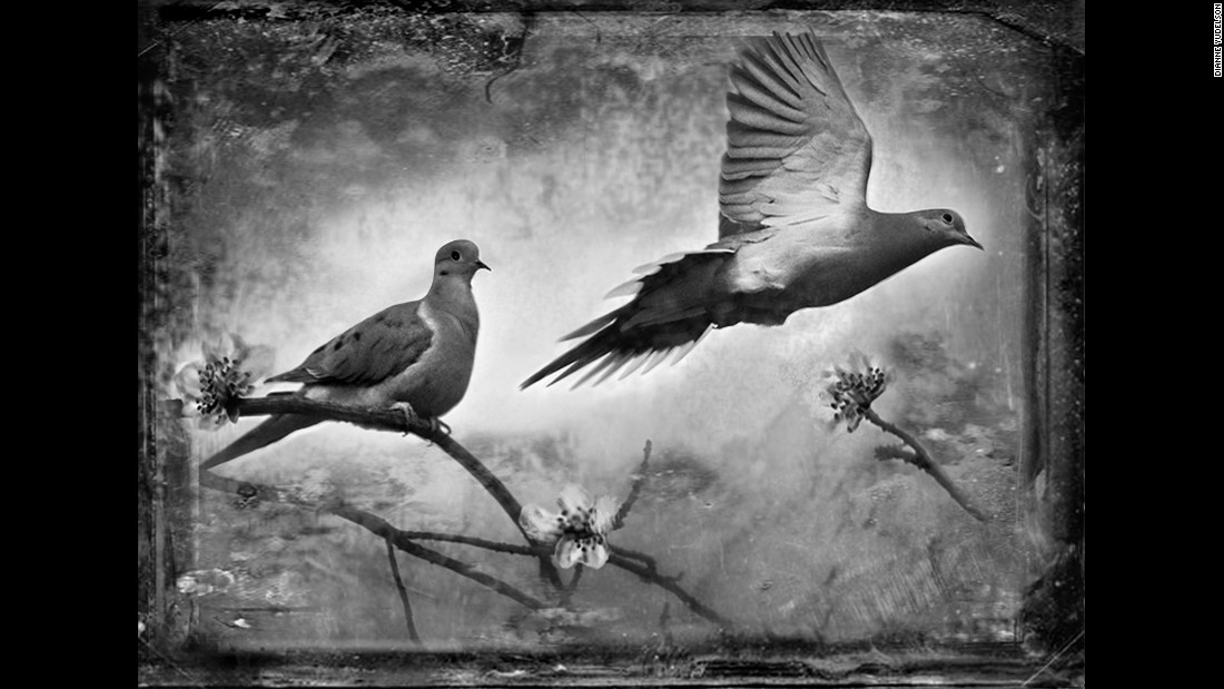 Mourning doves.