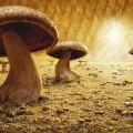 foodscapes carl warner-mushroom savanna