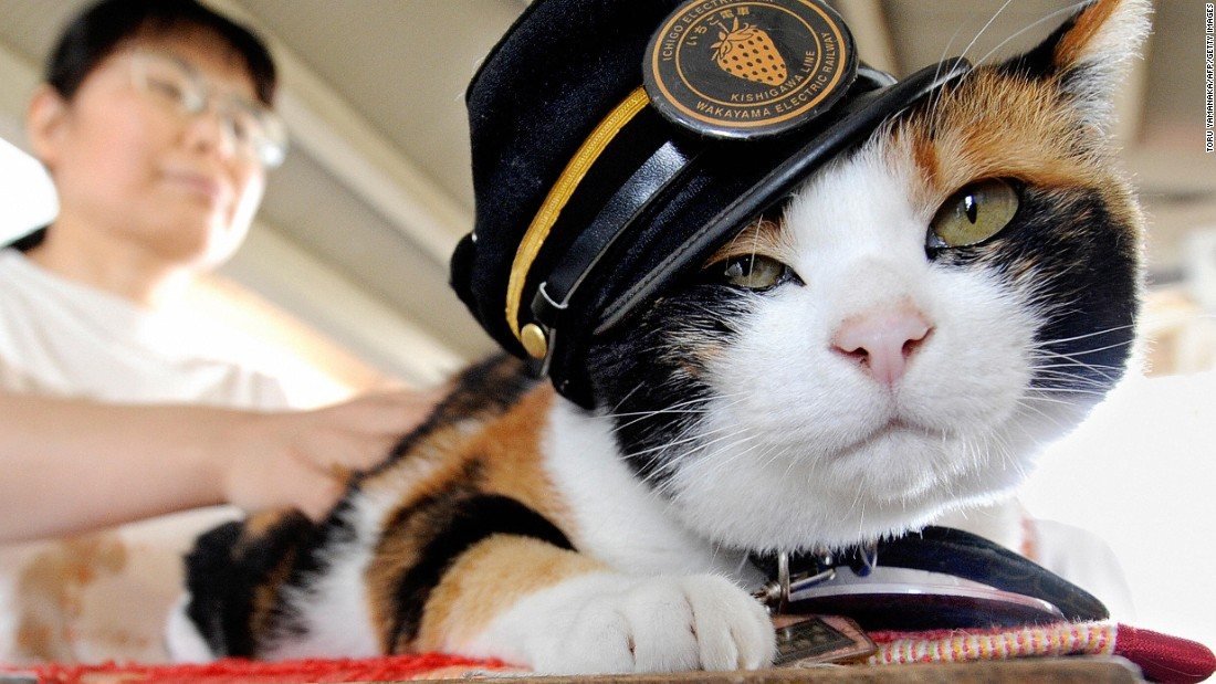 Tama the cat, Japan's cutest stationmaster, has died - CNN.com