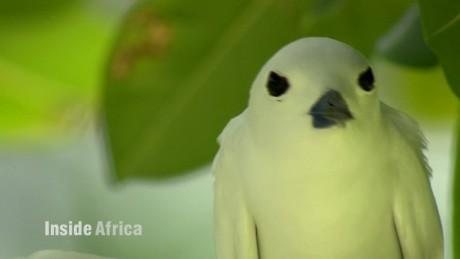 seychelles biodiversity inside africa a spc_00005122