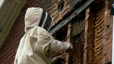 cnnee vo bees overrun a house_00003411