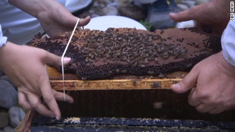 50,000 honeybees removed from home pkg_00015205.jpg