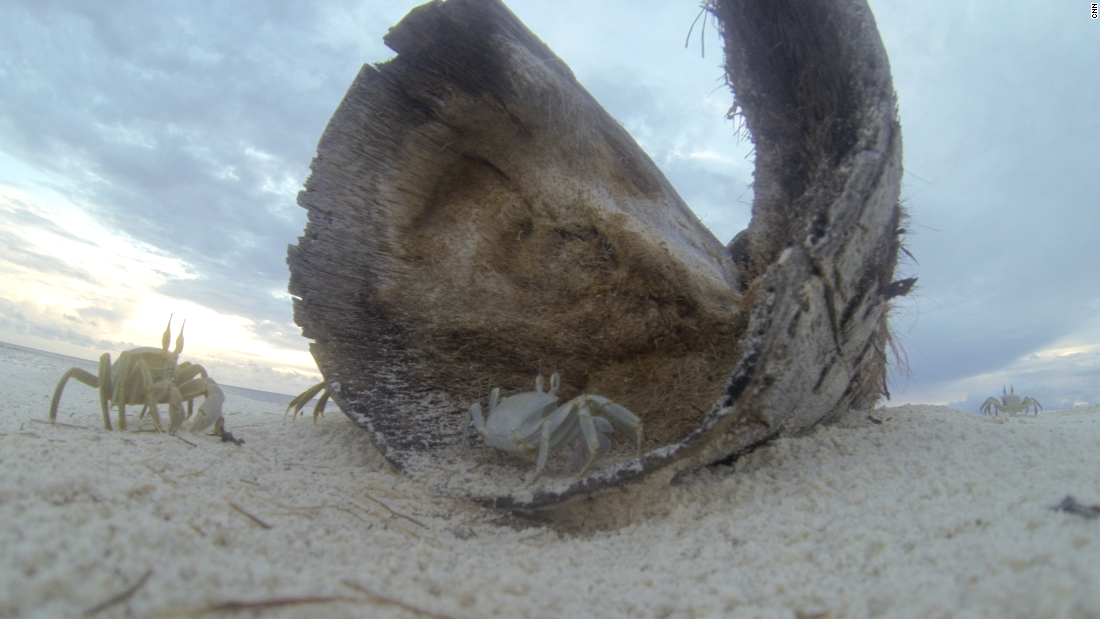 Like anywhere with sand, there's plenty of crabs to found too on Bird Island.