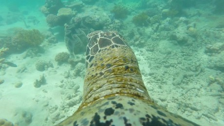See the Great Barrier Reef from a turtle's-eye view