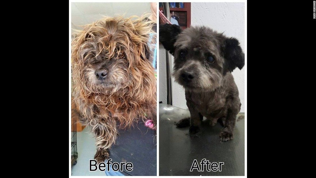 Chester, who was about 14, was in bad shape when he arrived at a Columbus, Georgia, shelter in April. The shelter gave him a bath and a grooming.