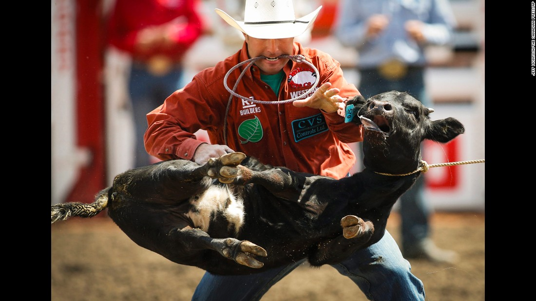 Lee Rombough ropes a calf Sunday, July 5, during the Calgary Stampede in Calgary, Alberta.