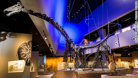 Say hello to Prince, Apollonia and Twinky, the gigantic stars of the Natural History Museum who've come all the way from Utah in the US. The largest, Prince, was shipped to Singapore in 27 huge, customized crates and took more than a fortnight to assemble.