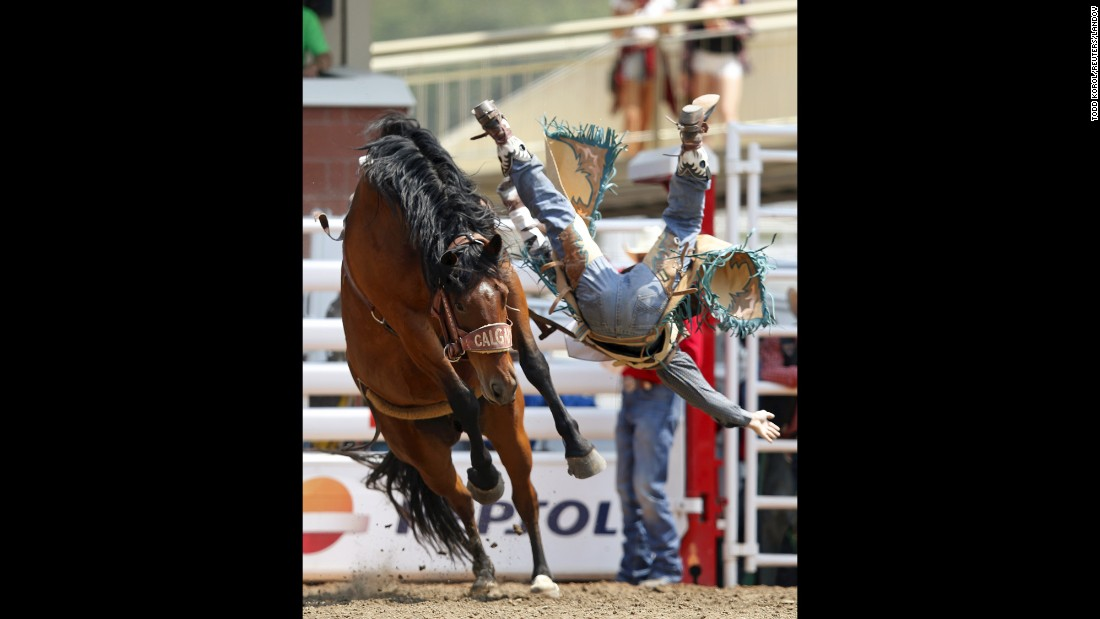 Jaden Clark goes flying off a horse Saturday, July 11, during the Calgary Stampede in Calgary, Alberta.