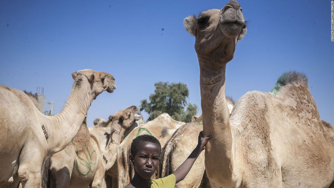 Hargeisa has a famous camel market. Exports of the cantankerous beasts is one of the biggest sources of income for Somaliland