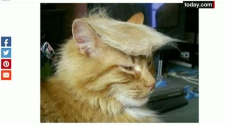 cnnee vo oraa cats with trump hair_00002326.jpg