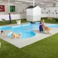 06 jfk animal terminal