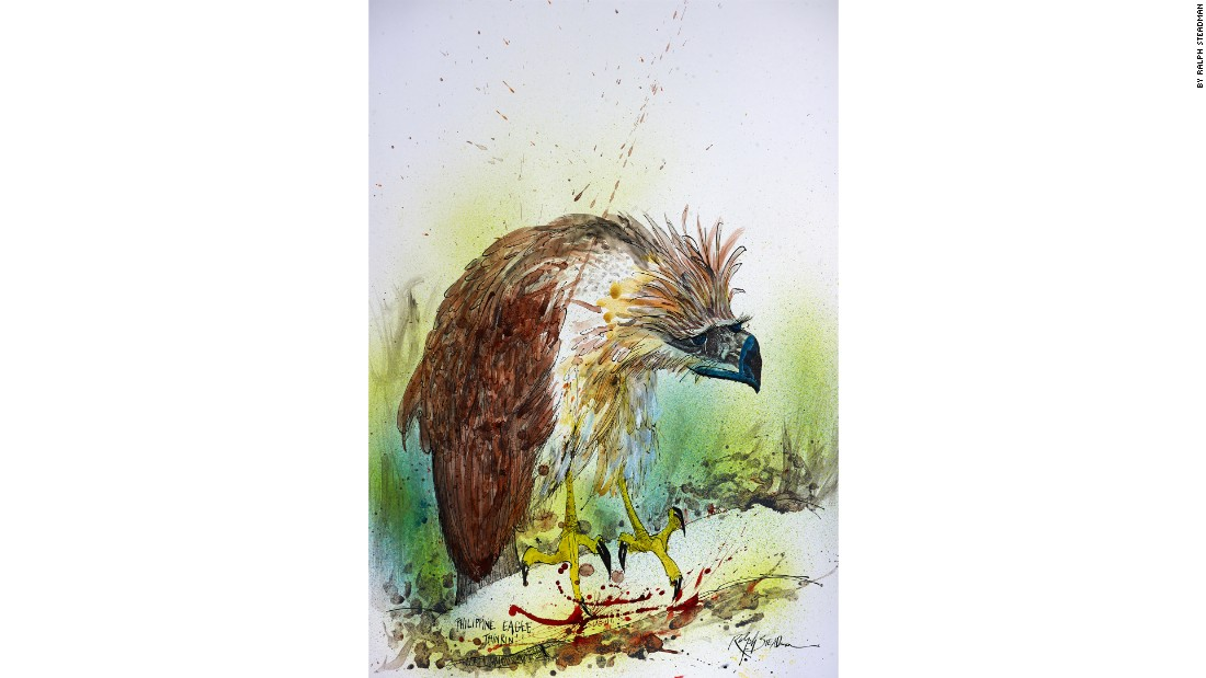 "Steadman: ""I'm a bit of a polluter really, when I think back now to the number of trees I've used up in the course of my work."" <br />Pictured, ""Philippine Eagle Thinking""."