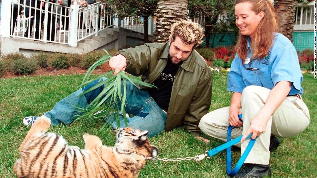 Boy band *NSYNC's Joey Fatone plays with a Bengal tiger cub at Busch Gardens, Tampa Bay on January 27, 2001 in Florida.