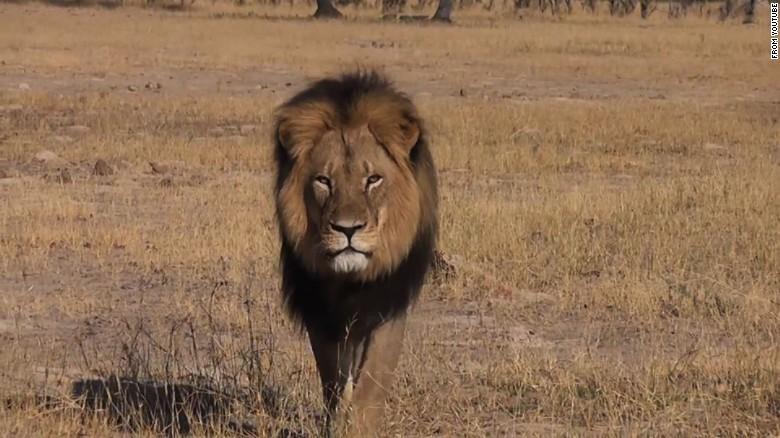 Beloved lion killed, hunter says he has regrets