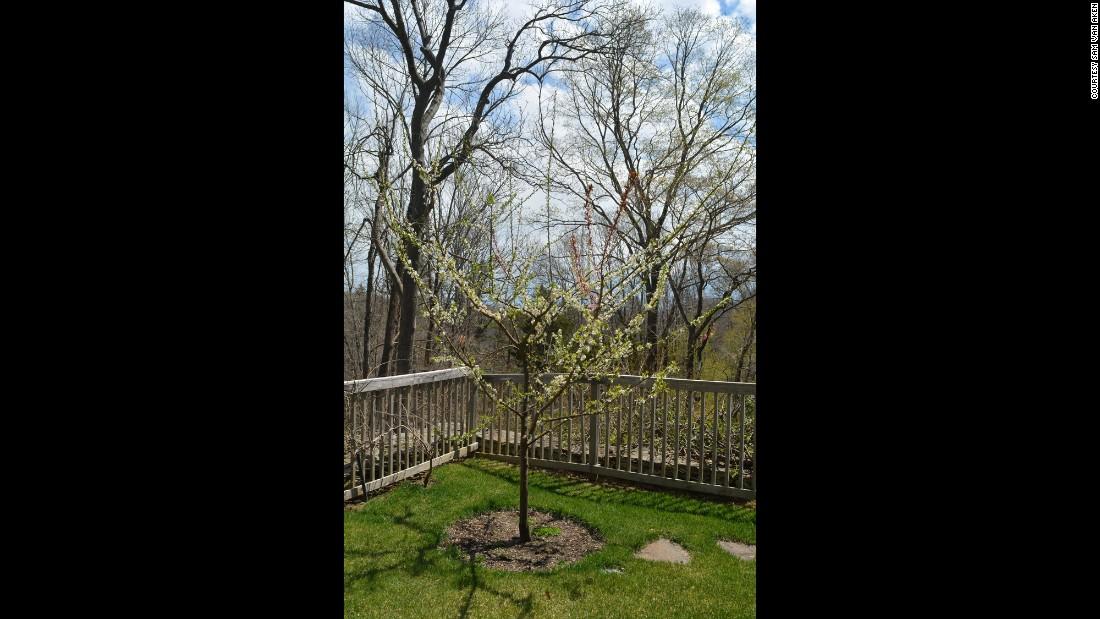 Plante árboles en flor ahora para un jardín en flor en primavera