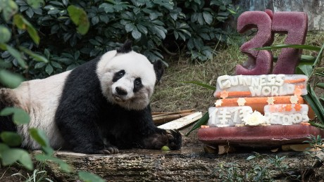 2015: Oldest ever giant panda in captivity