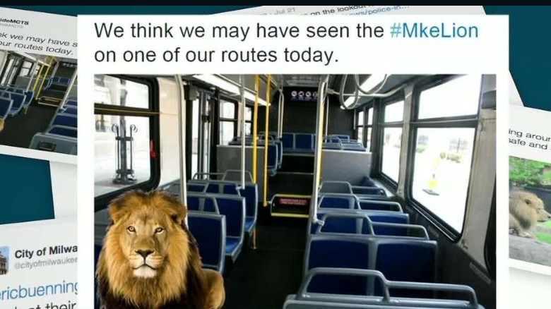 Mystery 'lion' on the loose in Milwaukee