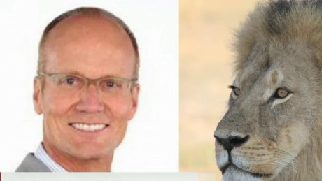 dentist faces backlash after killing lion young ac_00000110