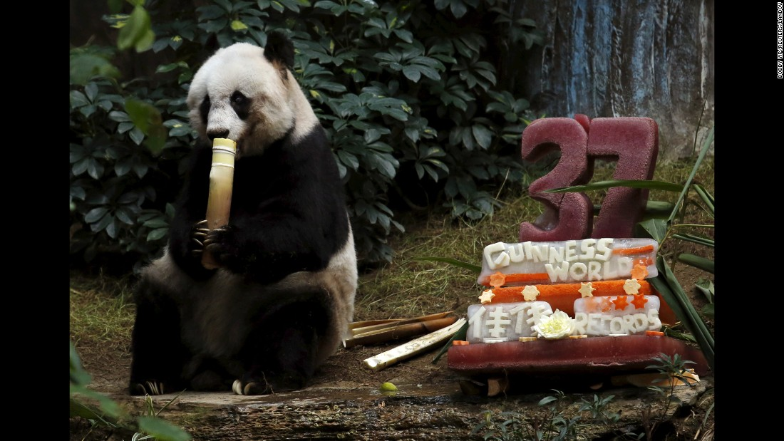 Jia Jia, the oldest giant panda living in captivity, eats beside a birthday cake of ice and vegetables as she celebrates her 37th birthday Tuesday, July 28, at Ocean Park Hong Kong.