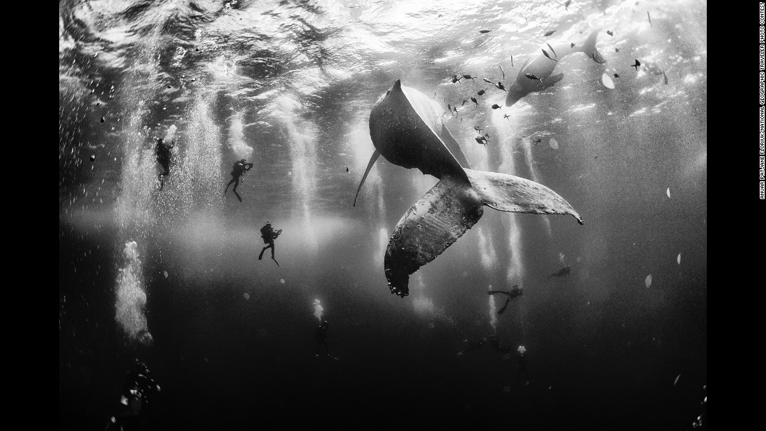 "In 2015, the <a href=""http://travel.nationalgeographic.com/photo-contest-2015/"" target=""_blank"">National Geographic Traveler Photo Contest</a> received more than 17,000 entries from photographers around the world. Grand-prize winner Anuar Patjane Floriuk will get an eight-day <a href=""http://www.nationalgeographicexpeditions.com/expeditions/costa-rica-photo-tour/detail"" target=""_blank"">National Geographic Photo Expedition</a> to Costa Rica and the Panama Canal. Here's how he describes his winning photo: ""Diving with a humpback whale and her newborn calf while they cruise around Roca Partida ... in the Revillagigedo (Islands), Mexico. This is an outstanding and unique place full of pelagic life, so we need to accelerate the incorporation of the islands into UNESCO as (a) natural heritage site in order to increase the protection of the islands against the prevailing illegal fishing corporations and big-game fishing."""