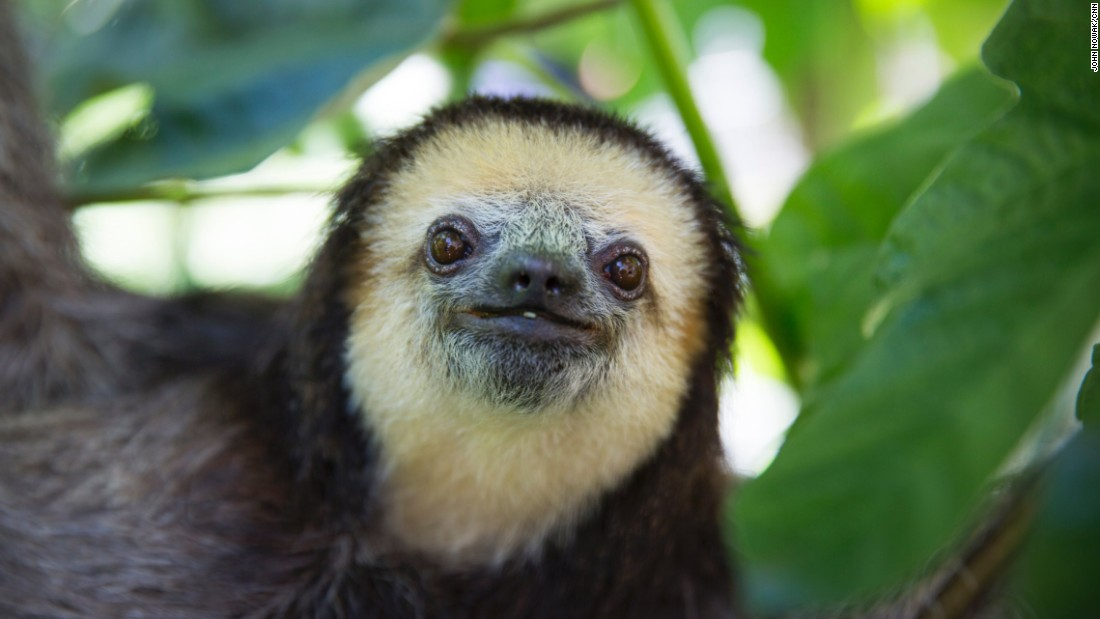 """When I release a sloth, I feel really happy because the animal is where he belongs. That's the ultimate goal of my work,"" Pool said. ""Wild animals belong in the wild."""