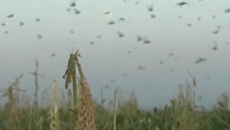 cnnee vo locust plague rusia_00004622