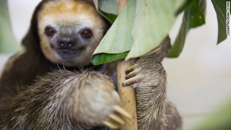 Extra: Hanging with the sloths