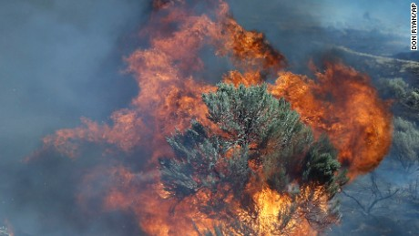 Fire engulfs a juniper tree near Roosevelt, Wash., Wednesday, Aug. 5, 2015. An entire small town in south central Washington remained under an evacuation order because of a fast-growing wildfire. (AP Photo/Don Ryan)