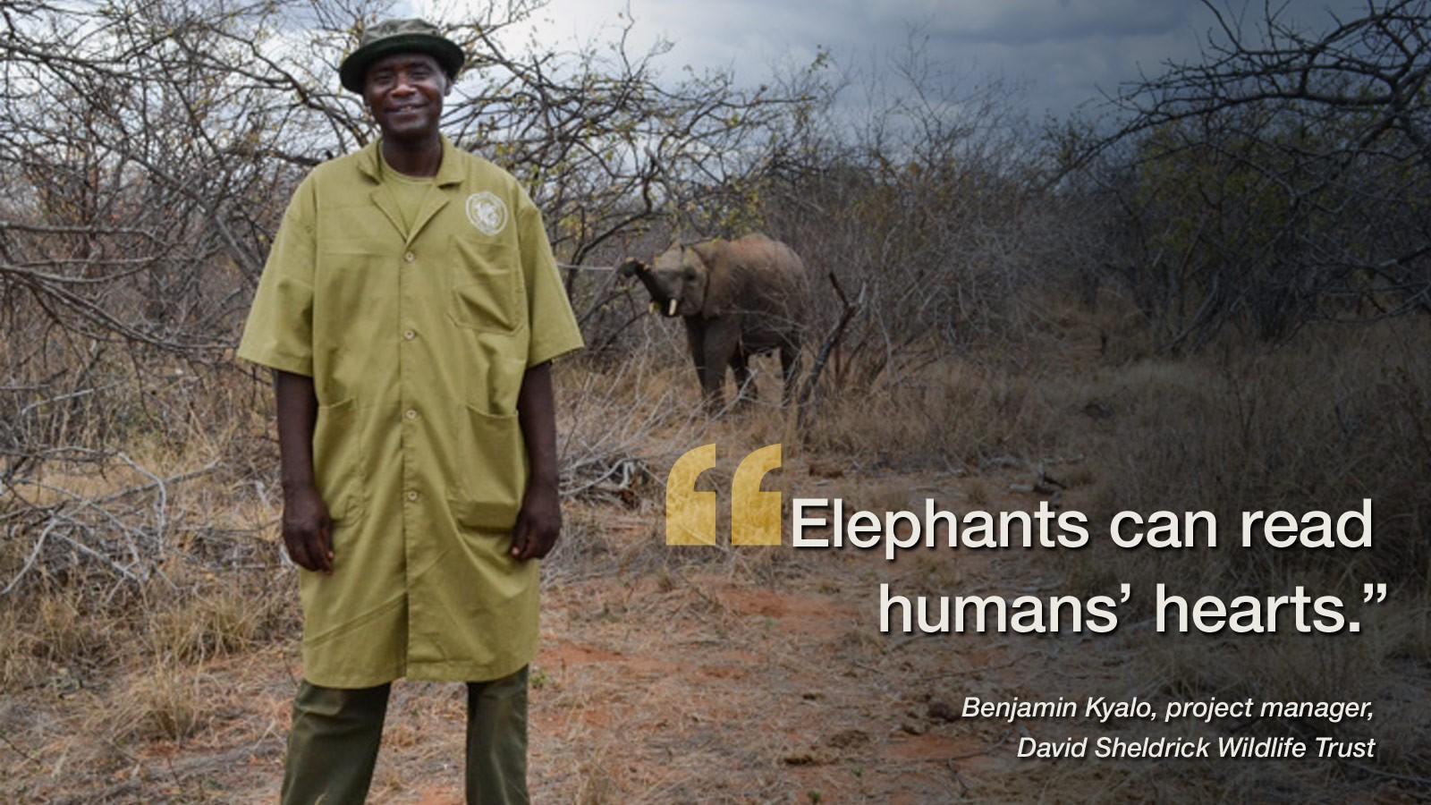 Bildergebnis für David Sheldrick Wildlife Trust quotes