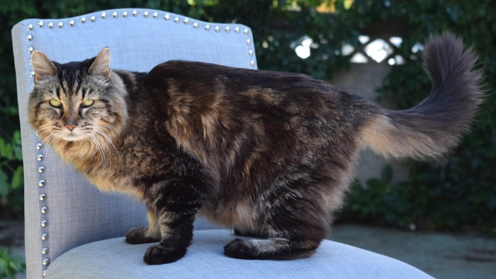 corduroy 26 named oldest living cat cnn