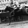 CNN_06_PALIO_Funnell_MG_3203