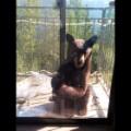 09.bear.IMG_20150813_093751.jpgjpg