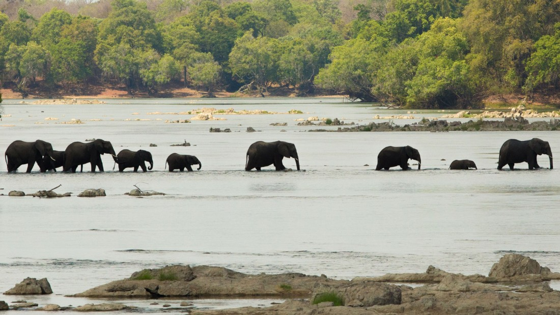 Zambia 7 Elephants crossing the Kafue River
