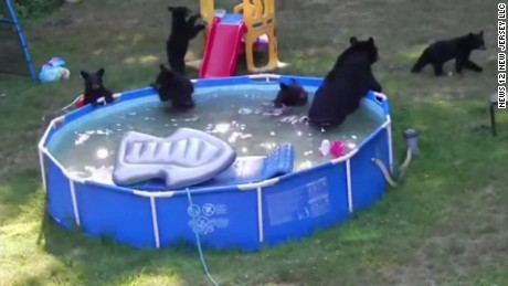 bear family in kiddie pool pkg_00000921