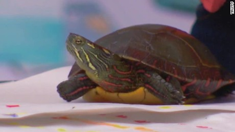 craft turtle pet store carbonaro effect _00022513.jpg