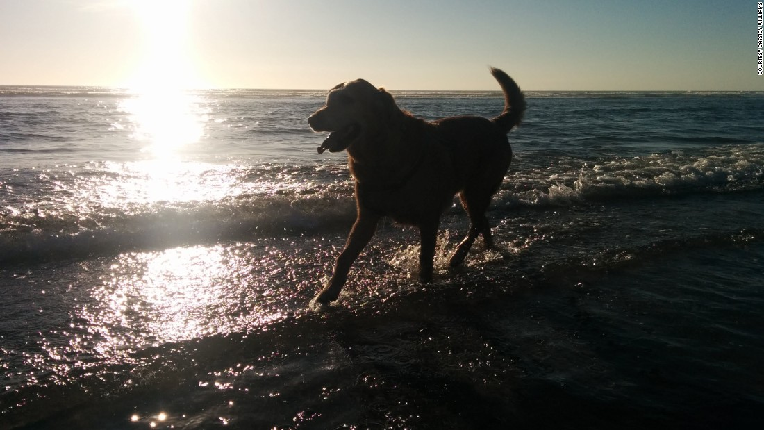 Dood's diagnosis spurred Williams' family to bring him out to Oregon from Utah for the wedding and to see the ocean for the first time. Here, Dood enjoys the beach in Manzanita, Oregon.