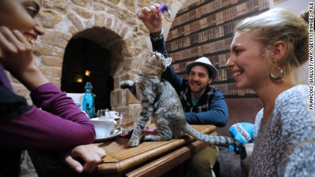 """Cat cafe"" is among the words and phrases added to Oxford's online dictionary."